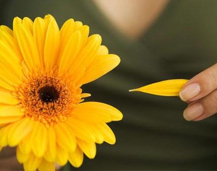 MAIN_197-plucking_petals_from_flower